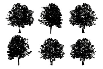 set of six trees silhouettes isolated on white background with c
