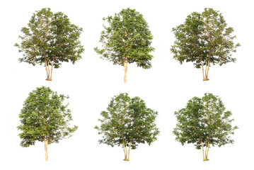 six trees collection isolated on white background with clipping