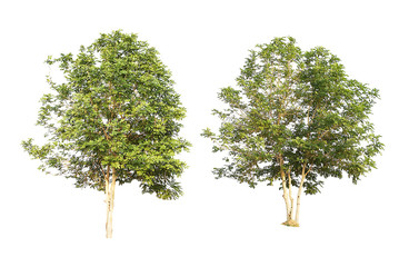 set of two green trees isolated on white background
