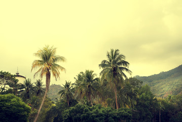 Vintage nature background of coconut palm tree on tropical beach with sunlight of in summer,  retro effect filter