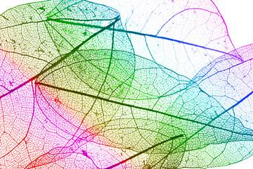 Keuken foto achterwand Decoratief nervenblad Multicolor decorative skeleton leaves