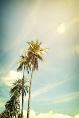 Vintage nature background of coconut palm tree on tropical beach blue sky with sunlight of morning in summer,  retro effect filter