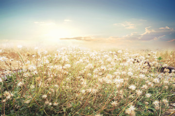 Fototapete - Landscape of flower with sun sky, vintage color effect