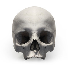 Fototapete - Human skull on white background.