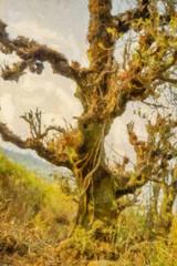 Big fairy old tree illustration