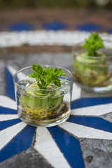 grow your own celery from scraps