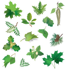 Leaf collection. Summer nature icon set. Forest leaves isolated