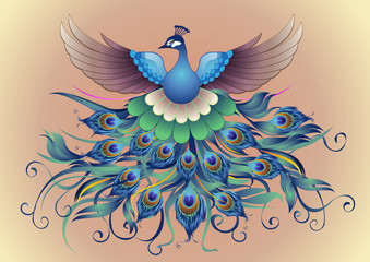 Vector, Beautiful Peacock in decorative style