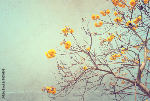Wall mural nature of vintage tree flower in summer ,canvas paper art texture