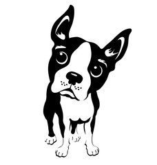 cartoon illustration of a boston terrier dog