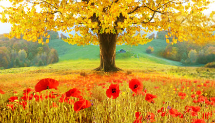 Beautiful autumn landscape with a lonely tree and poppies (medit