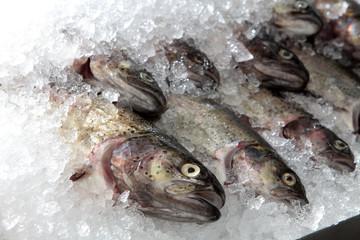 Markthalle Kassel : Stand mit frischem Fisch