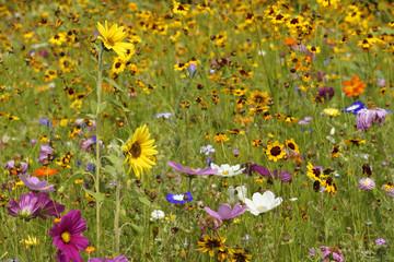 Sommerliches Wildblumenfeld