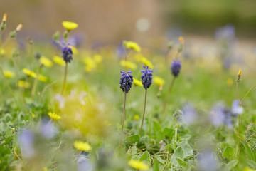 yellow and purple meadow flowers