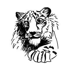 Vector hatching tiger