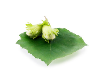 branch with green hazelnuts isolated on a white background