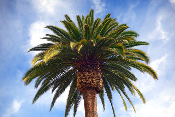 palm tree with cloudy sky