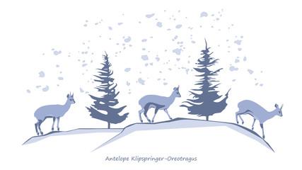 Antelope Klipspringer-Oreotragus Silhouettes