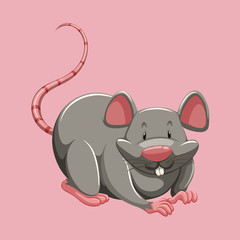 Gray rat on pink
