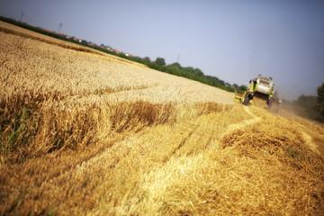Foto auf Gartenposter Landschappen Combine harvester working in the field