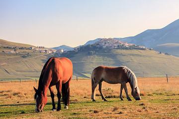 Alba con Cavalli a Catelluccio di Norcia
