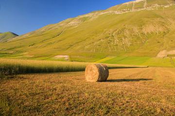 Castelluccio di Norcia: Balla di fieno al tramonto