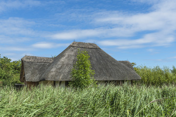 A roof of a thatched hat above tall vegetation