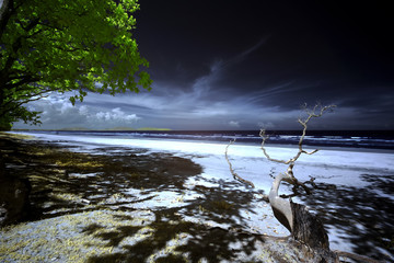 Infrared edited image of tree branch and leaves at the beach with sea and haze empty sky
