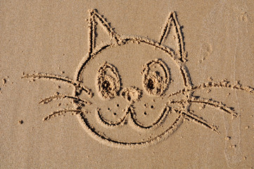 muzzle a cat on the sand