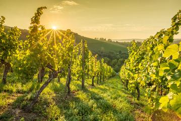 Deurstickers Geel Sonnenstrahlen beim Sonnenaufgang im Weinberg
