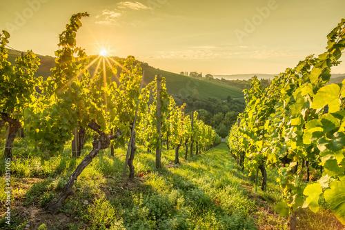 Fototapete Sonnenstrahlen beim Sonnenaufgang im Weinberg