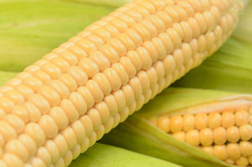 Fresh ripe corn cob between green leaves