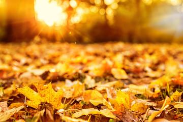 schöne Herbststimmung Blätter im goldenen Licht