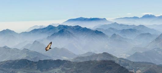 In de dag Lichtblauw gleitender Geier in den Gipfeln der Picos de Europa in Asturien (Spanien)