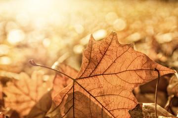 Herbst Blätter Bokeh