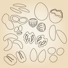 various nuts types brown outline icons set eps10