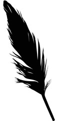 small black single isolated feather