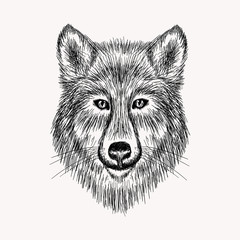 Sketch realistic face Wolf. Hand drawn vector  illustration in D