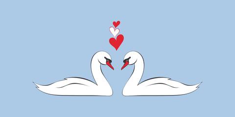 Loving couple of swans