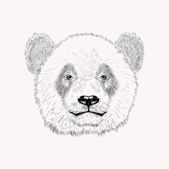Sketch panda face. Hand drawn vector illustration.