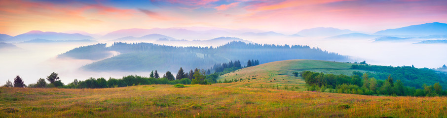 Wall Mural - Sunny summer morning in the foggy Carpathian mountains