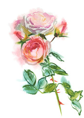 branch of pink roses, watercolor sketch, drawing on paper