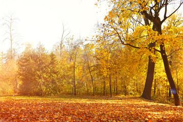 Beautiful autumn trees with sunlight in park