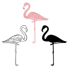Flamingo. Vector set. Hand drawn illustration, isolated element