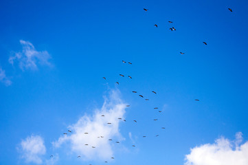 Sky background. Sky,clouds and birds background.