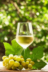 Coid white wine and green grapes on natural blurred background w