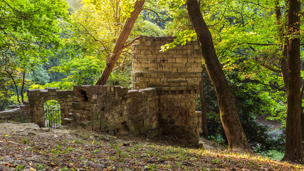 Ruins of tower and walls in woods. Lviv, Ukraine