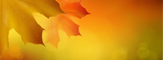 Herbstblätter - Bokeh