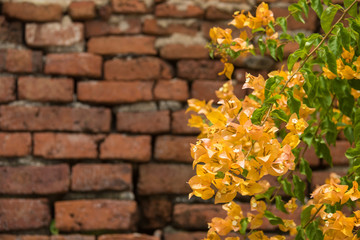 Flowers and brick wall