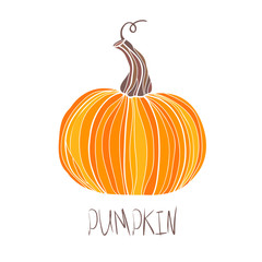 Pumpkin Isolated on White Vector illustration